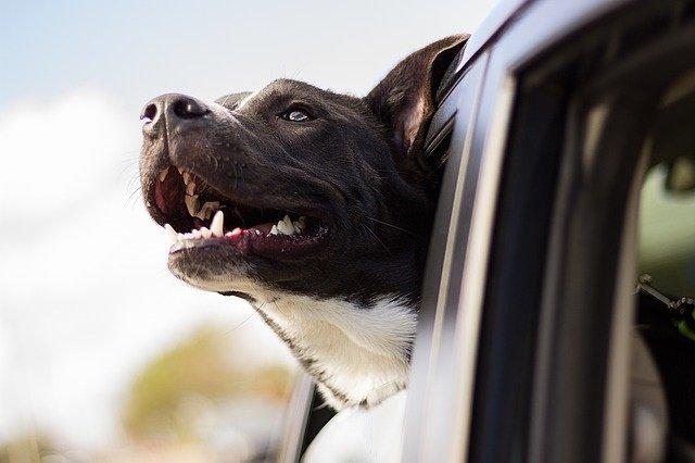 dog-1149964_640