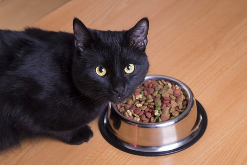 Best Weight Loss Cat Food For Overweight Cats We Re All