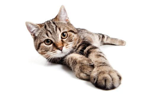 The 5 Best Antihistamines For Cat Allergies In 2019 We
