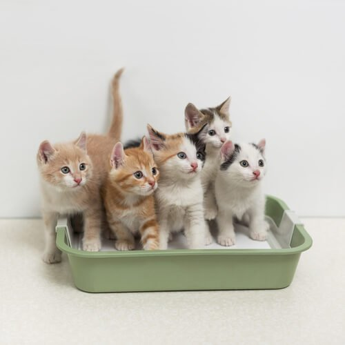 multiple cat litter in box