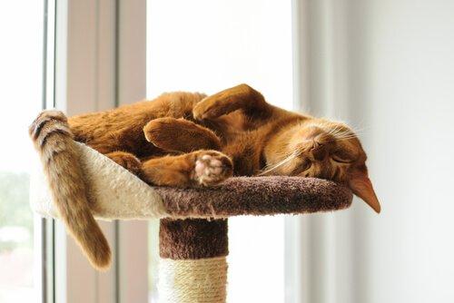 cat relax (1)