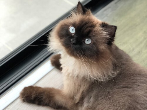 The 5 Best Cat Foods For Himalayan Cats 2019 We Re All
