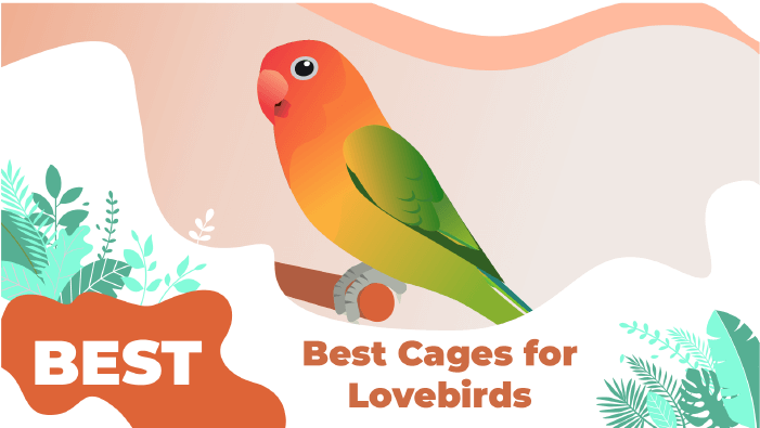 LOVEBIRDS Cages