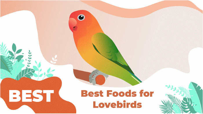 LOVEBIRDS FOODS