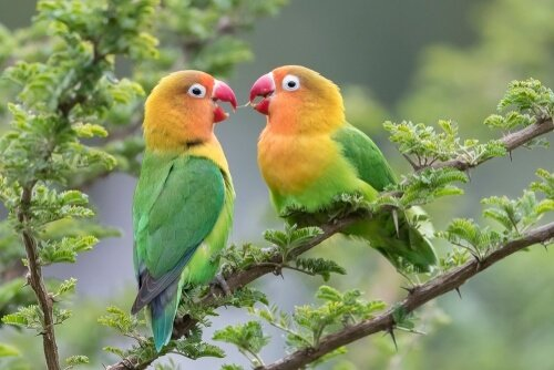The 6 Best Foods For Lovebirds 2020