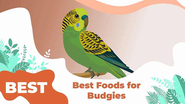 The 5 Best Food For Budgies In 2020