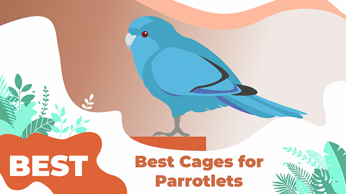 Best Bird Cages for Parrotlets