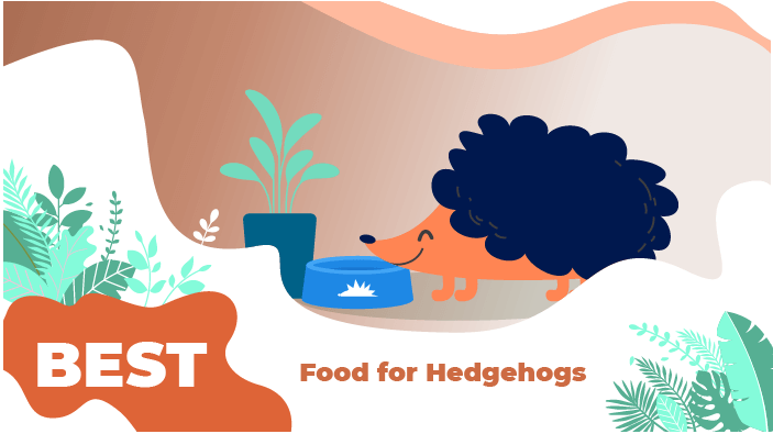 hedgehogs food