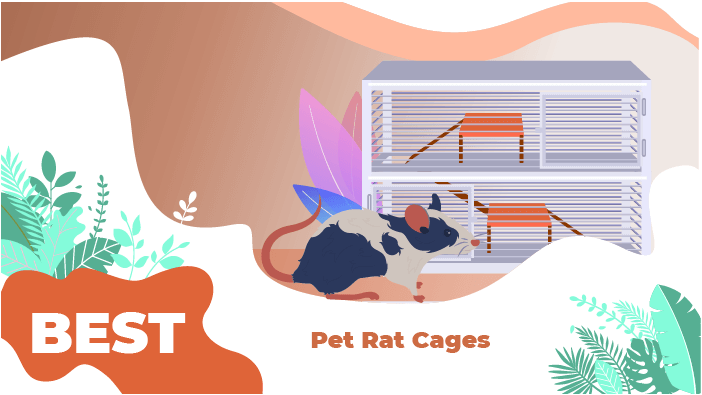 best rat cages