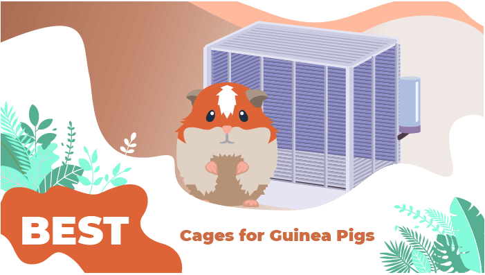 best cage guinea foods