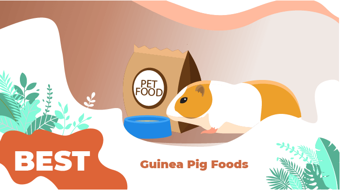 best guinea pigs food