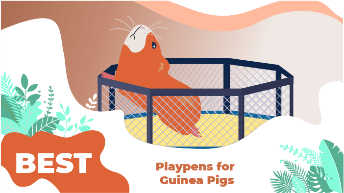 The 5 Best Playpens for Guinea Pigs