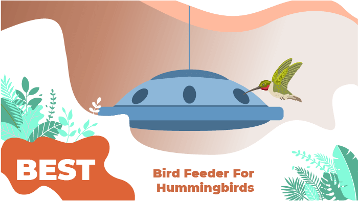 best hummingbirds feeders