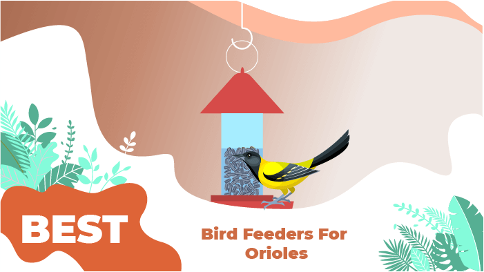 best orioles bird feeder