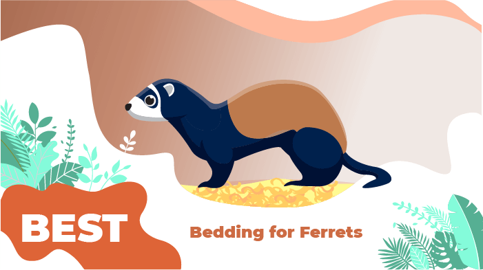 bedding ferrets
