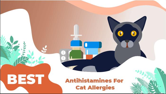 best cat antihistamines