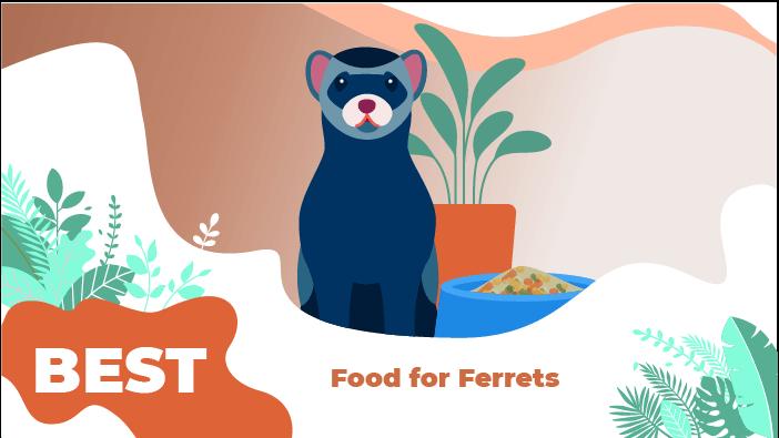 ferret food