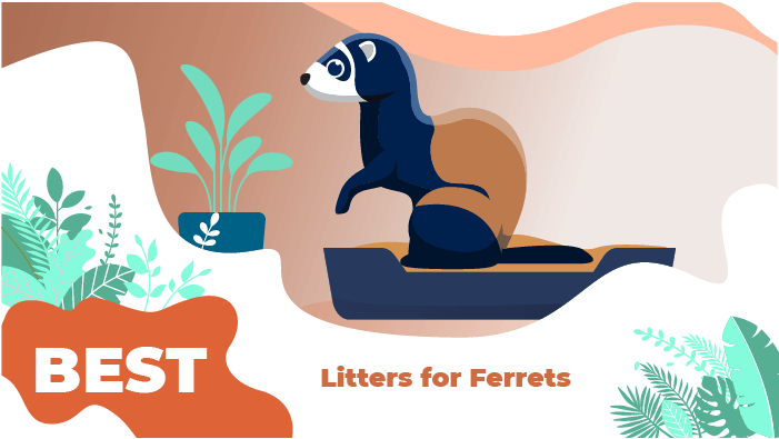 Best Litters for Ferrets