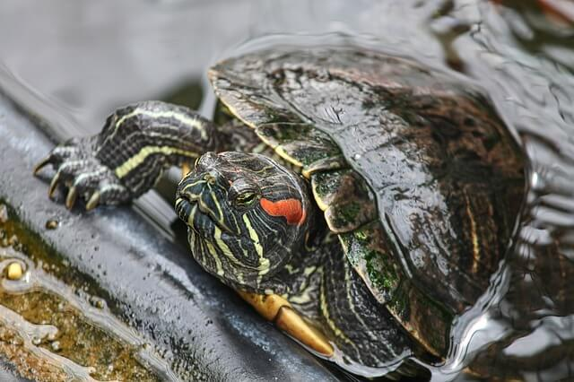 turtle-4339914_640 (1)