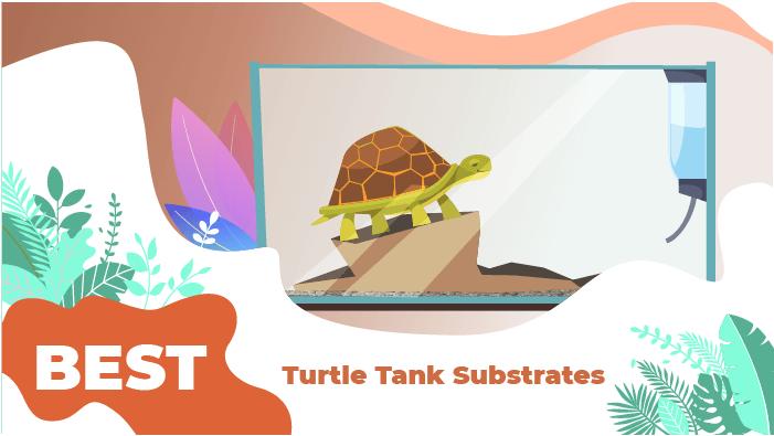 best turtle tank