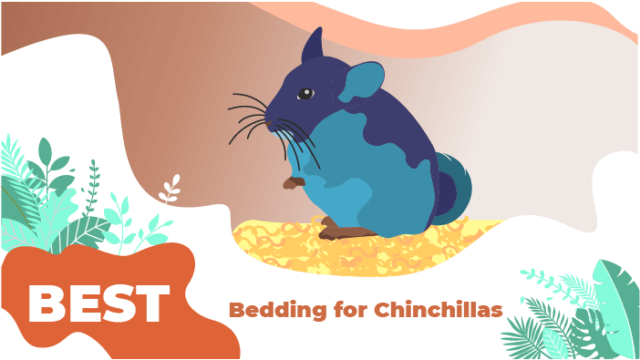 bedding chinchilla