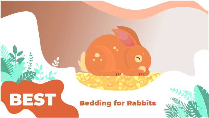 bedding rabbit
