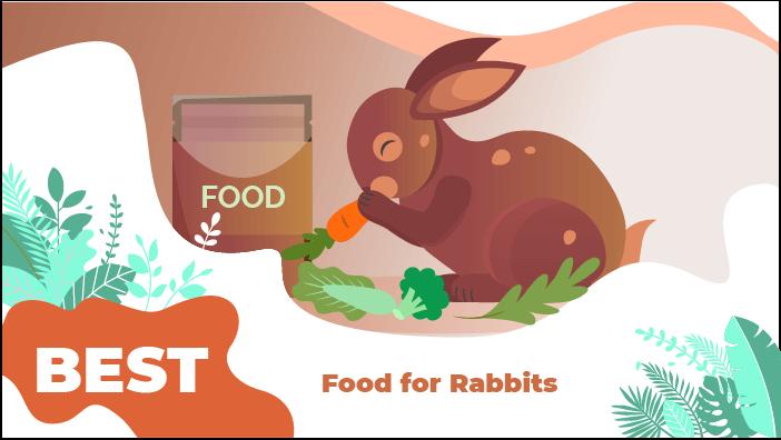 food rabbits