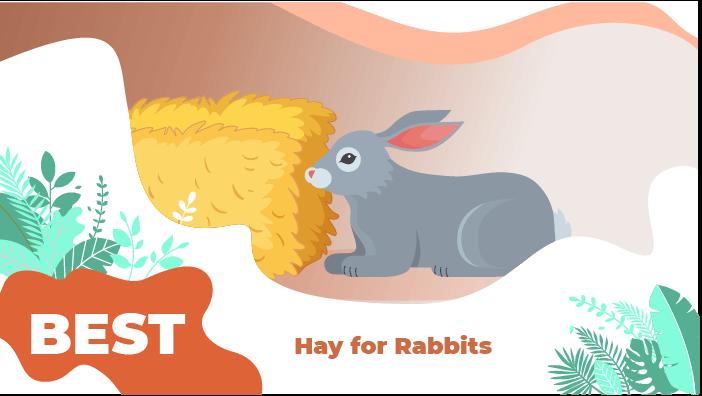 hay rabbit