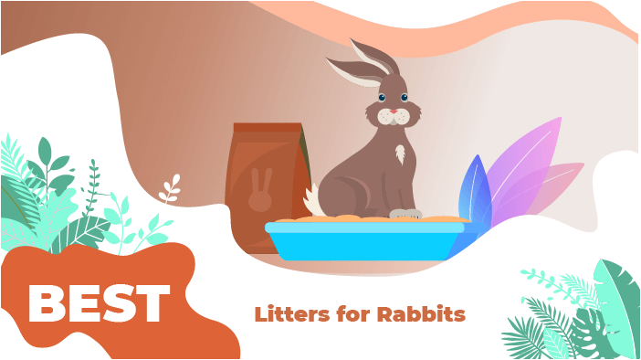 litters rabbits