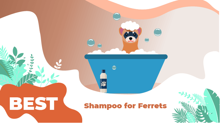 Best Shampoo for Ferrets