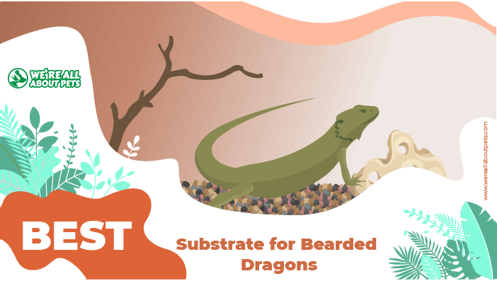 dragons substrate
