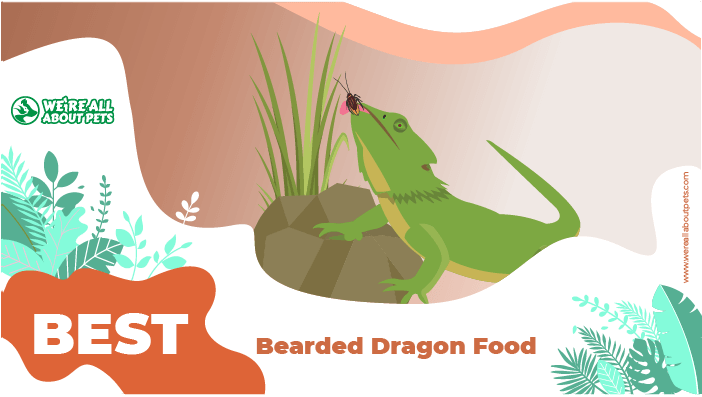food dragon