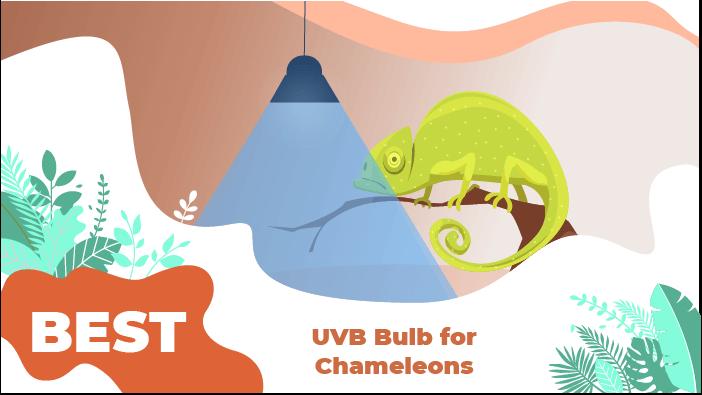uvb bulb chameleon