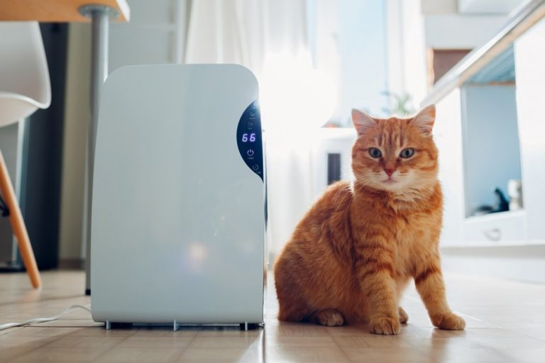 Air-Purifiers-for-Cat-Litter-Dust