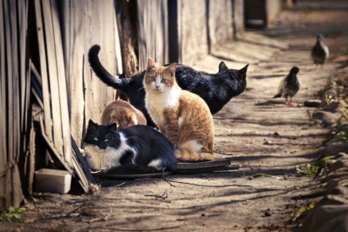 Best Cat Food for Feeding Feral Cats