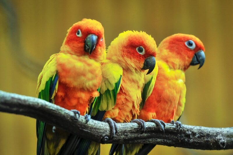 The 140 Best Parrot Names In 2020 We Re All About Pets