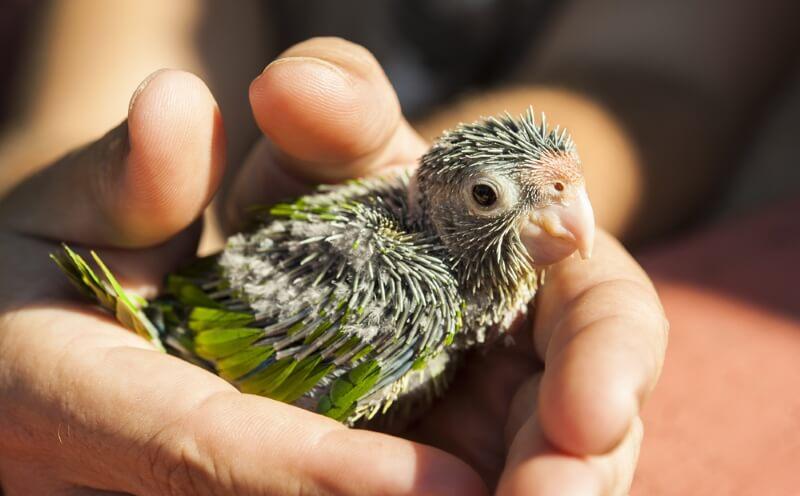 baby parakeet names