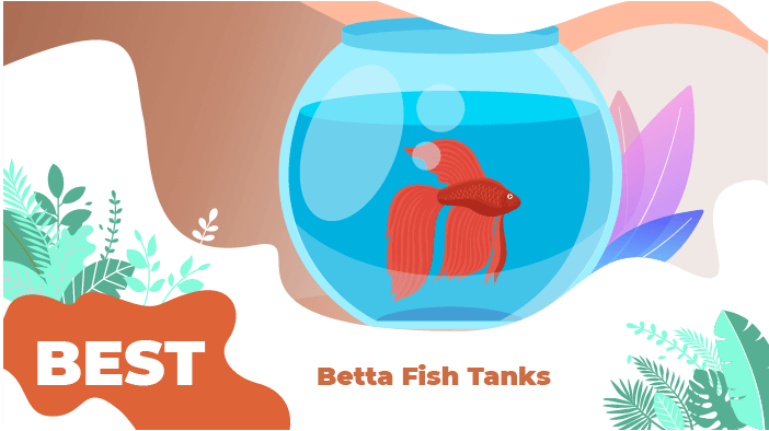 betta tanks_1