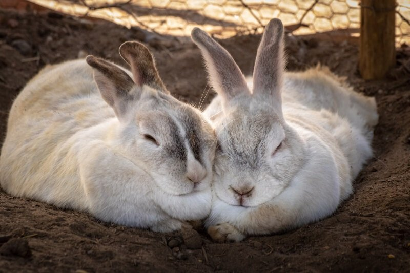 The 210+ Best Rabbit Names In 2020 - We're All About Pets