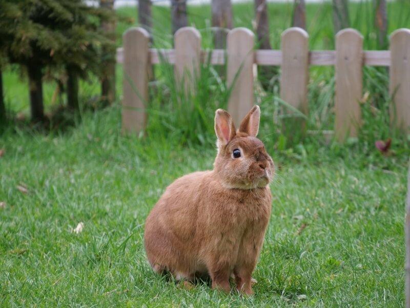 Boy Rabbit Names