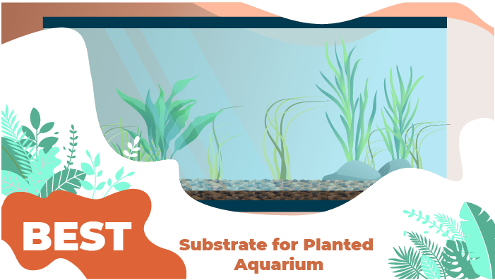 substrates planted aquarium