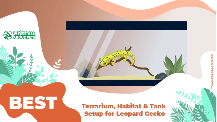 terrarium habitat for gecko