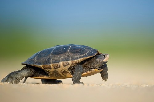 The 140 Best Pet Turtle Names We Re All About Pets