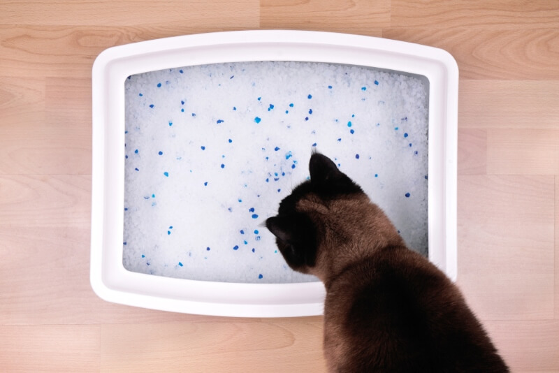 Cheap Cat Litter Boxes