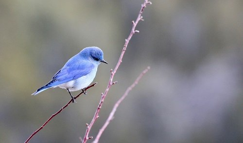 Blue Bird Names >> 100 Awesome Blue Bird Names We Re All About Pets