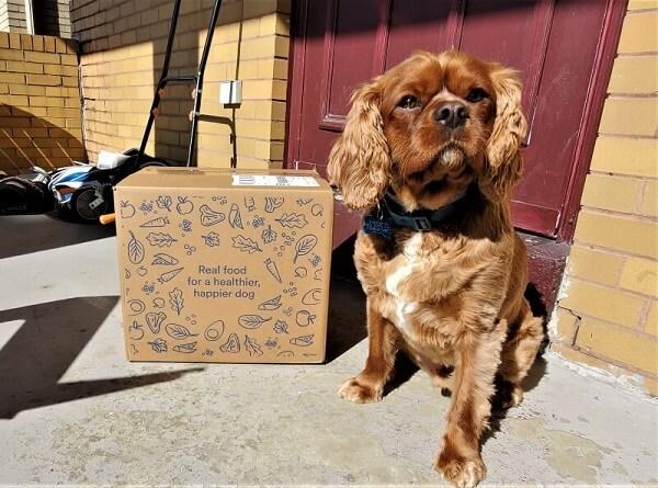SpotTango-dog-food review