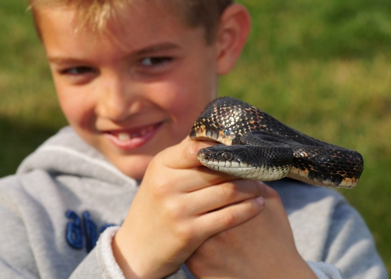 Male Snake Names