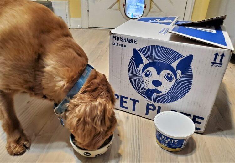 petplate dog food testing