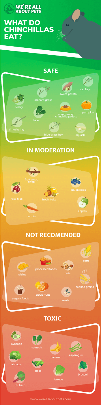 Safe and Unsafe Foods for Chinchillas