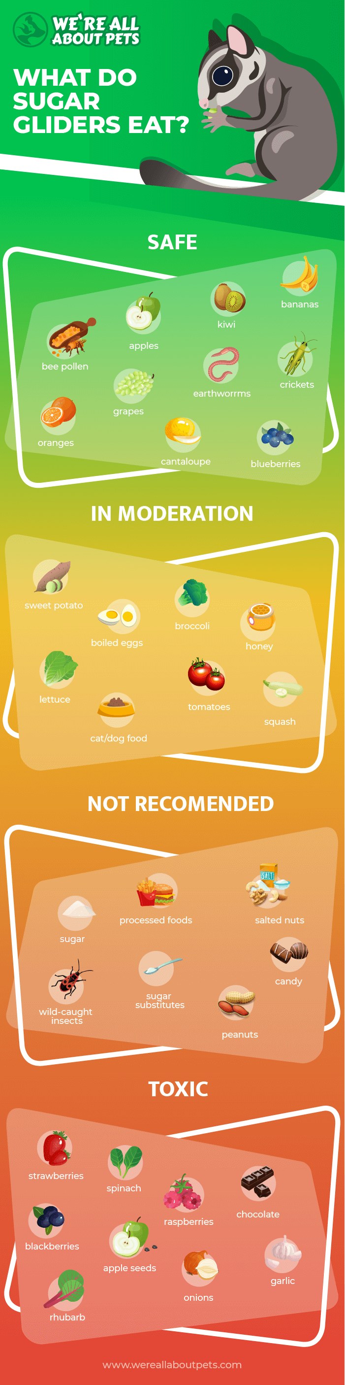 what do sglider eat info
